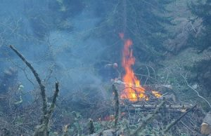 آتش سوزی در جنگل های سوانتی و سوختن بیش از 2.5 هکتار