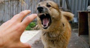 بازدید از دامپزشک در هر گونه چنگ، گزش و لیس توسط سگ