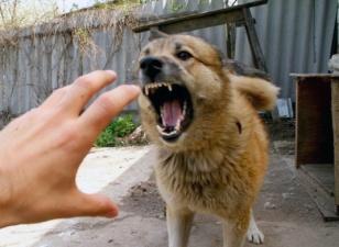 رئیس آژانس نظارت بر حیوانات گرجستان:بازدید از دامپزشک در هر گونه چنگ، گزش و لیس توسط سگ
